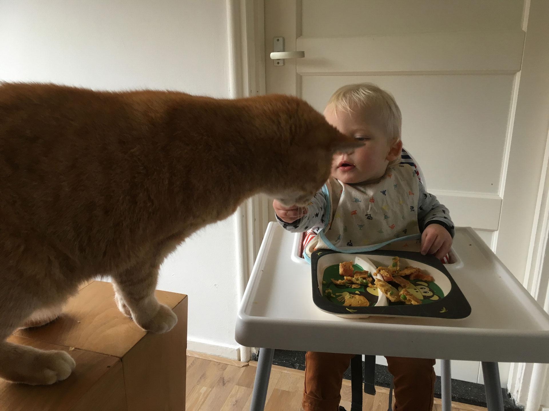 kind-vegan-opvoeden1